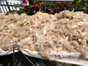 Wollwäsche