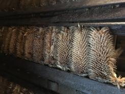 Noch heute werden mit der Weberkarde hochwertige Lodenstoffe hergestellt.